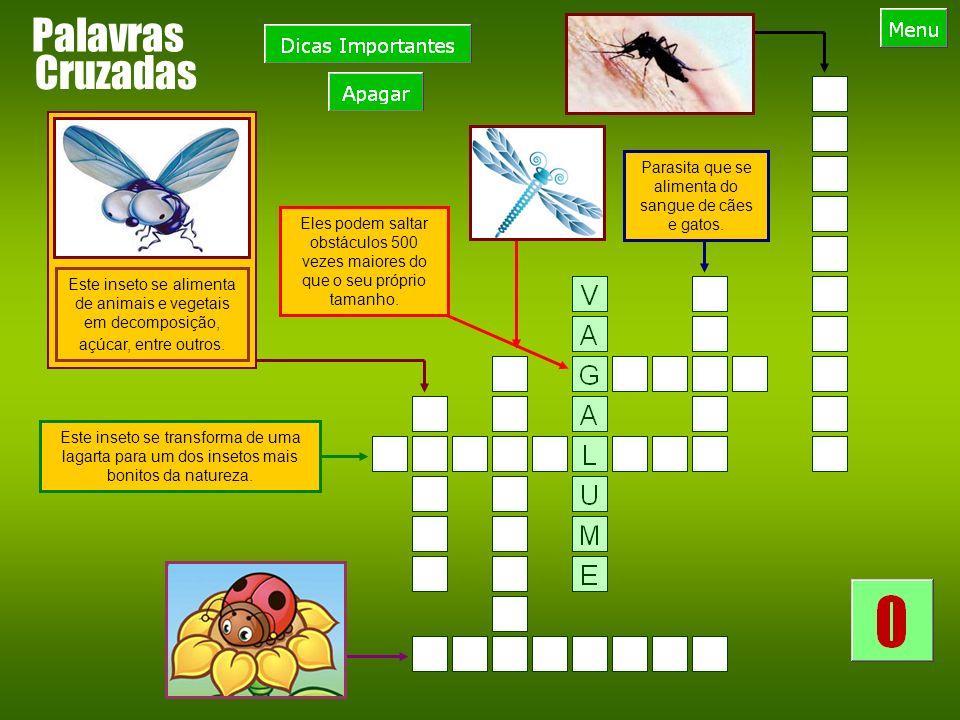 Palavras Este inseto se transforma de uma lagarta para um dos insetos mais bonitos da natureza.