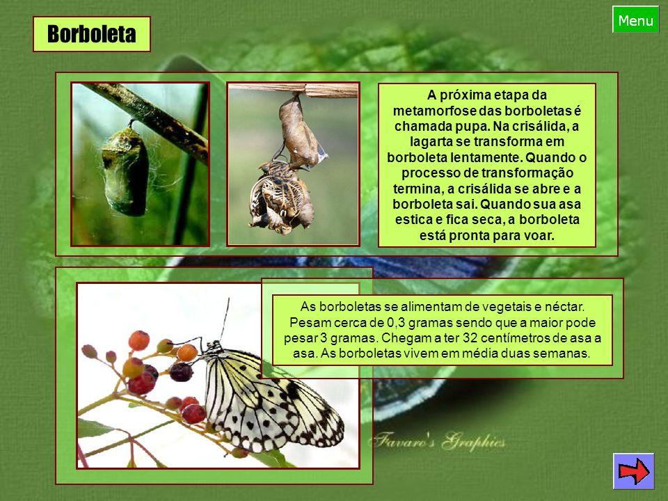 Vaga-lume Nome comum: Vaga-lume Nome científico: Lampyris noctiluca Classe: Insecta Filo: Arthropoda Ordem: Coleoptera Família: Lampyridae O que são vaga-lumes.