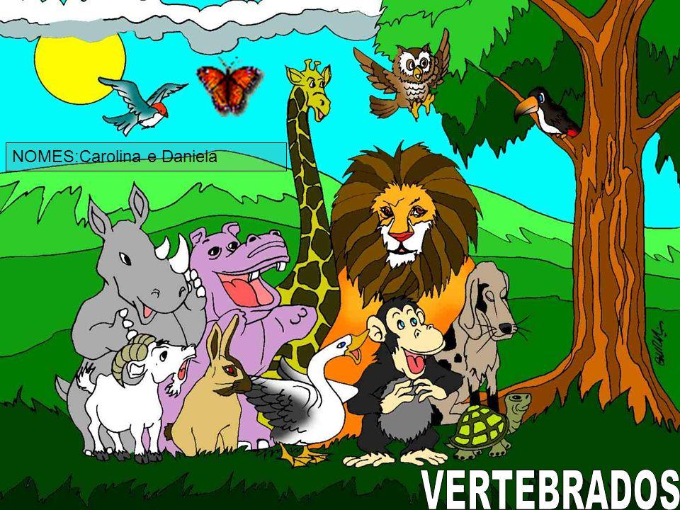 CARACTERÍSTICAS As aves são animais vertebrados que podem ser facilmente distinguidos pela presença de penas.