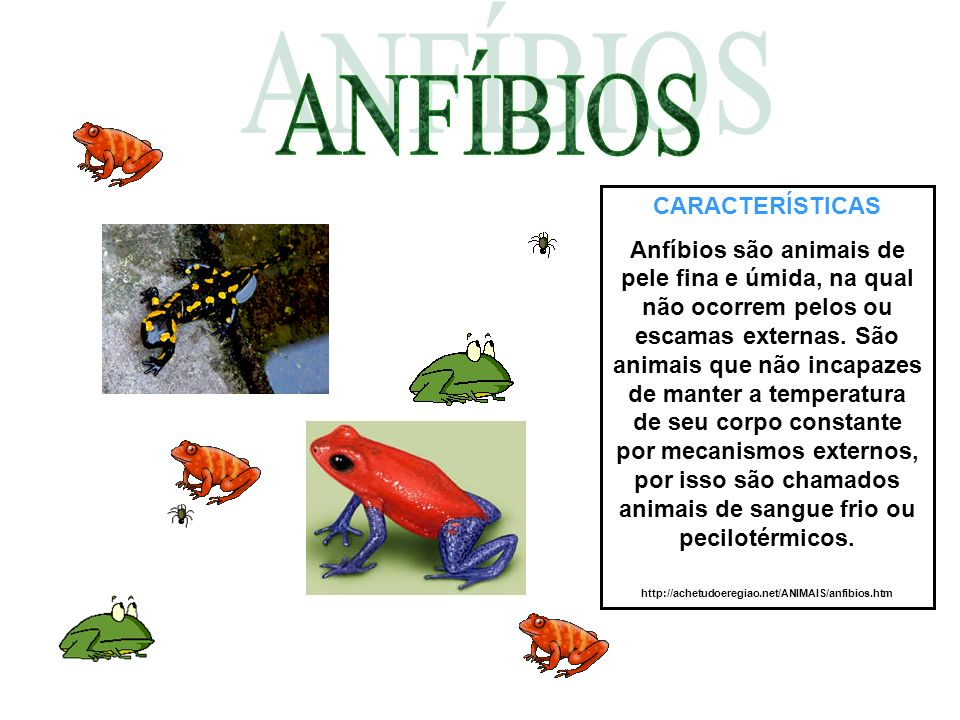 CARACTERÍSTICAS Anfíbios são animais de pele fina e úmida, na qual não ocorrem pelos ou escamas externas. São animais que não incapazes de manter a te