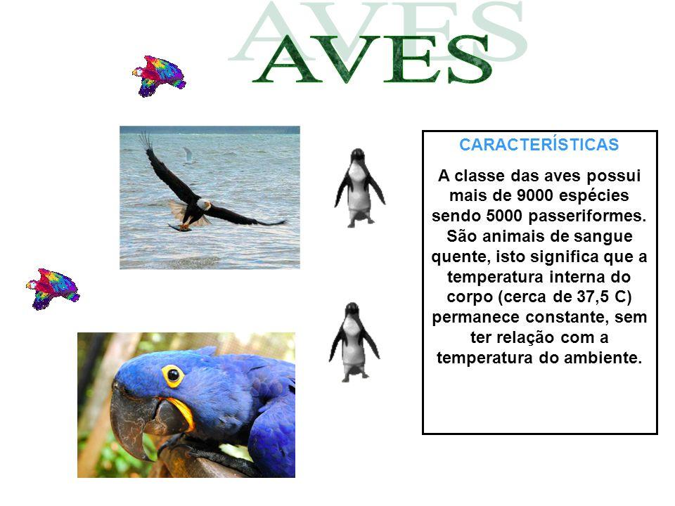 CARACTERÍSTICAS A classe das aves possui mais de 9000 espécies sendo 5000 passeriformes. São animais de sangue quente, isto significa que a temperatur