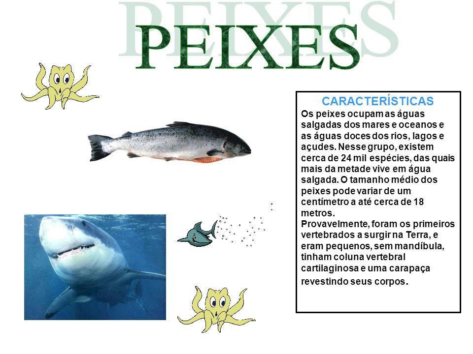 CARACTERÍSTICAS Os peixes ocupam as águas salgadas dos mares e oceanos e as águas doces dos rios, lagos e açudes. Nesse grupo, existem cerca de 24 mil