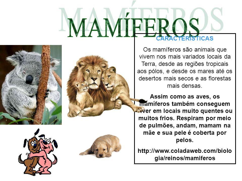 CARACTERÍSTICAS A maioria dos animais mamíferos têm pelos e glândulas mamárias para alimentar os filhotes e também vivem nos maiores lugares da terra.