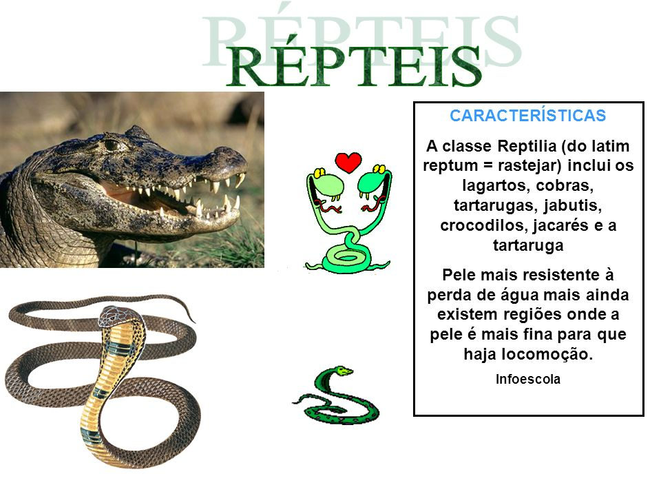 CARACTERÍSTICAS A classe Reptilia (do latim reptum = rastejar) inclui os lagartos, cobras, tartarugas, jabutis, crocodilos, jacarés e a tartaruga Pele