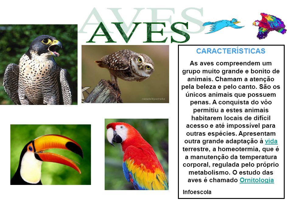 CARACTERÍSTICAS As aves compreendem um grupo muito grande e bonito de animais. Chamam a atenção pela beleza e pelo canto. São os únicos animais que po