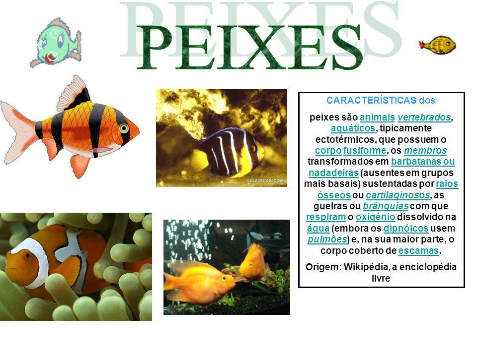 CARACTERÍSTICAS dos peixes são animais vertebrados, aquáticos, tipicamente ectotérmicos, que possuem o corpo fusiforme, os membros transformados em ba