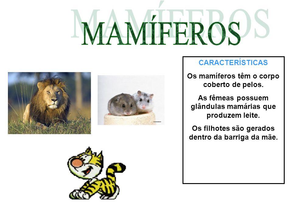 CARACTERÍSTICAS Os mamíferos têm o corpo coberto de pelos. As fêmeas possuem glândulas mamárias que produzem leite. Os filhotes são gerados dentro da