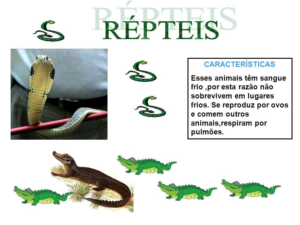 CARACTERÍSTICAS Esses animais têm sangue frio,por esta razão não sobrevivem em lugares frios. Se reproduz por ovos e comem outros animais,respiram por