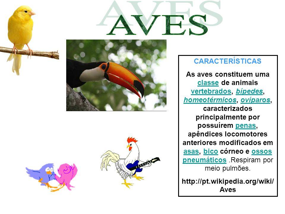 CARACTERÍSTICAS As aves (latim científico: Aves) constituem uma classe de animais vertebrados, bípedes, homeotérmicos, ovíparos, caracterizados principalmente por possuírem penas, apêndices locomotores anteriores modificados em asas, bico córneo e ossos pneumáticos.
