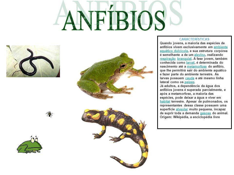 CARACTERÍSTICAS Quando jovens, a maioria das espécies de anfíbios vivem exclusivamente em ambiente aquático dulcícola, e sua estrutura corpórea é seme