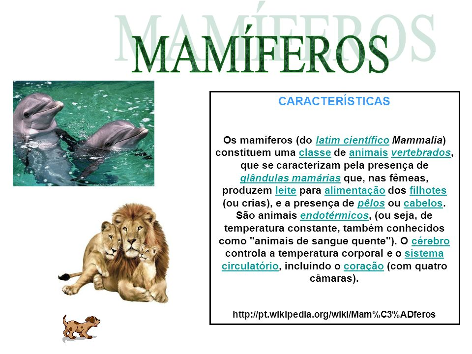 CARACTERÍSTICAS Os mamíferos (do latim científico Mammalia) constituem uma classe de animais vertebrados, que se caracterizam pela presença de glândul