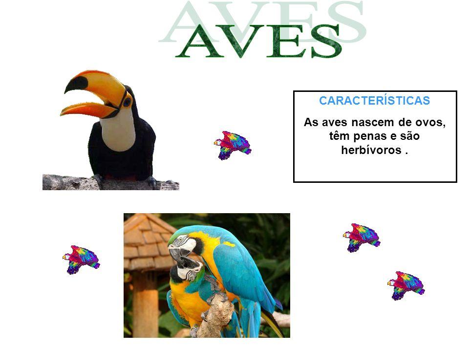 CARACTERÍSTICAS As aves nascem de ovos, têm penas e são herbívoros.