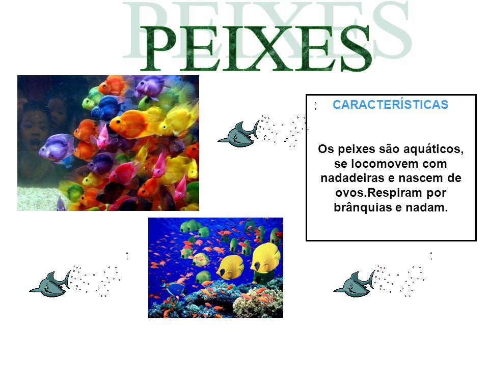 CARACTERÍSTICAS Os peixes são aquáticos, se locomovem com nadadeiras e nascem de ovos.Respiram por brânquias e nadam.