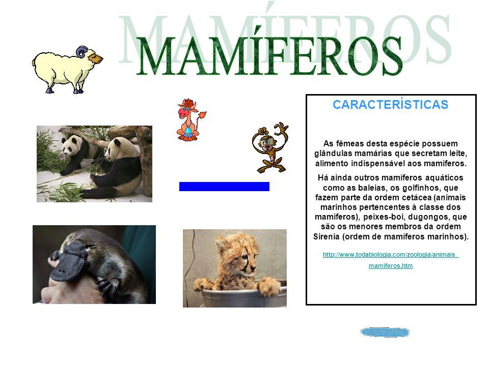 CARACTERÍSTICAS As fêmeas desta espécie possuem glândulas mamárias que secretam leite, alimento indispensável aos mamíferos. Há ainda outros mamíferos