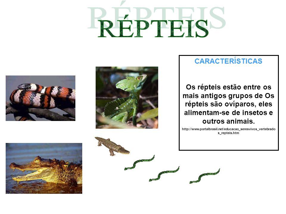 CARACTERÍSTICAS Os répteis estão entre os mais antigos grupos de Os répteis são ovíparos, eles alimentam-se de insetos e outros animais. http://www.po