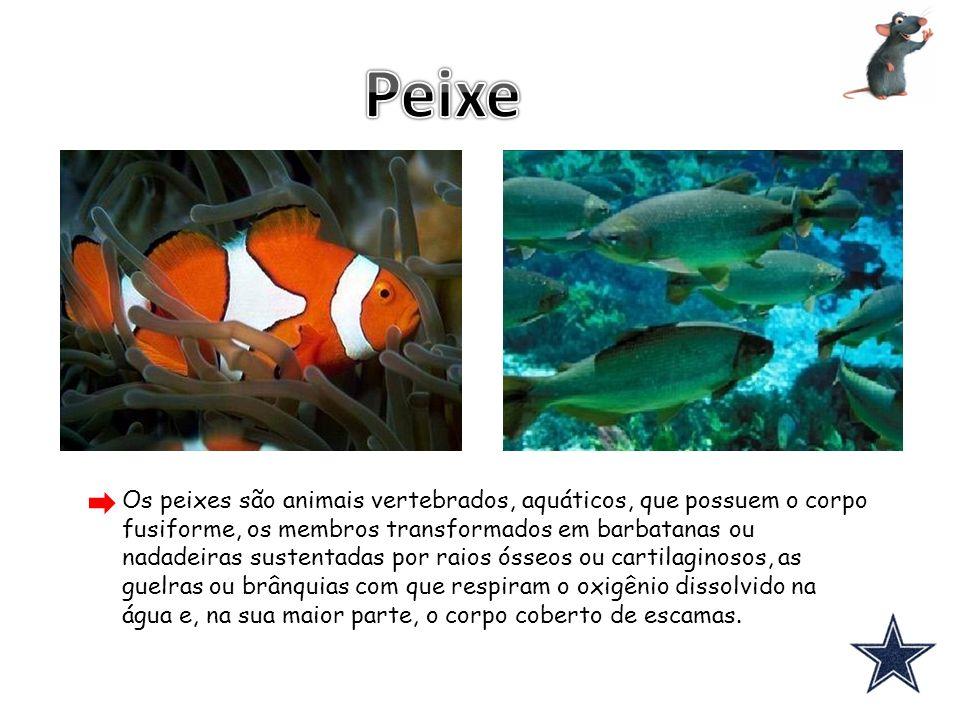 Os peixes são animais vertebrados, aquáticos, que possuem o corpo fusiforme, os membros transformados em barbatanas ou nadadeiras sustentadas por raio