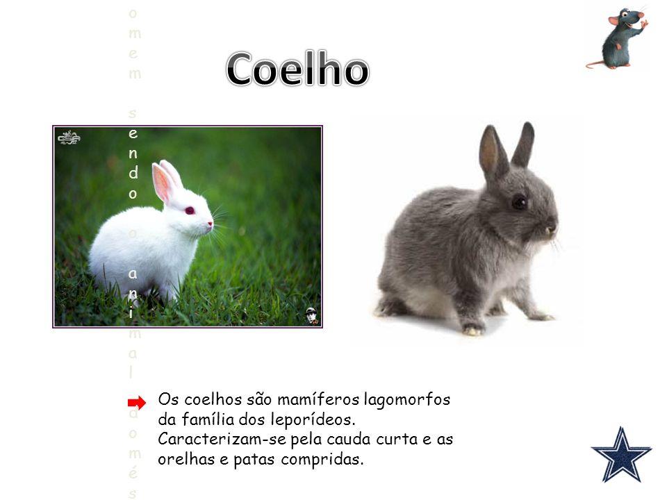 Os coelhos são mamíferos lagomorfos da família dos leporídeos.