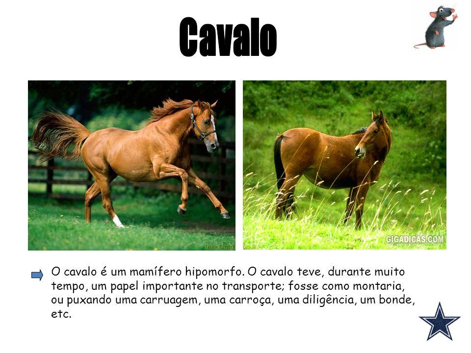 O cavalo é um mamífero hipomorfo. O cavalo teve, durante muito tempo, um papel importante no transporte; fosse como montaria, ou puxando uma carruagem