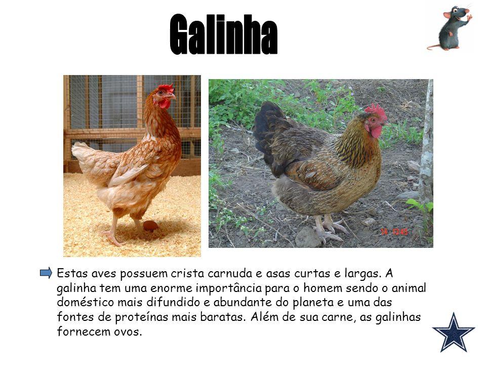 Estas aves possuem crista carnuda e asas curtas e largas. A galinha tem uma enorme importância para o homem sendo o animal doméstico mais difundido e