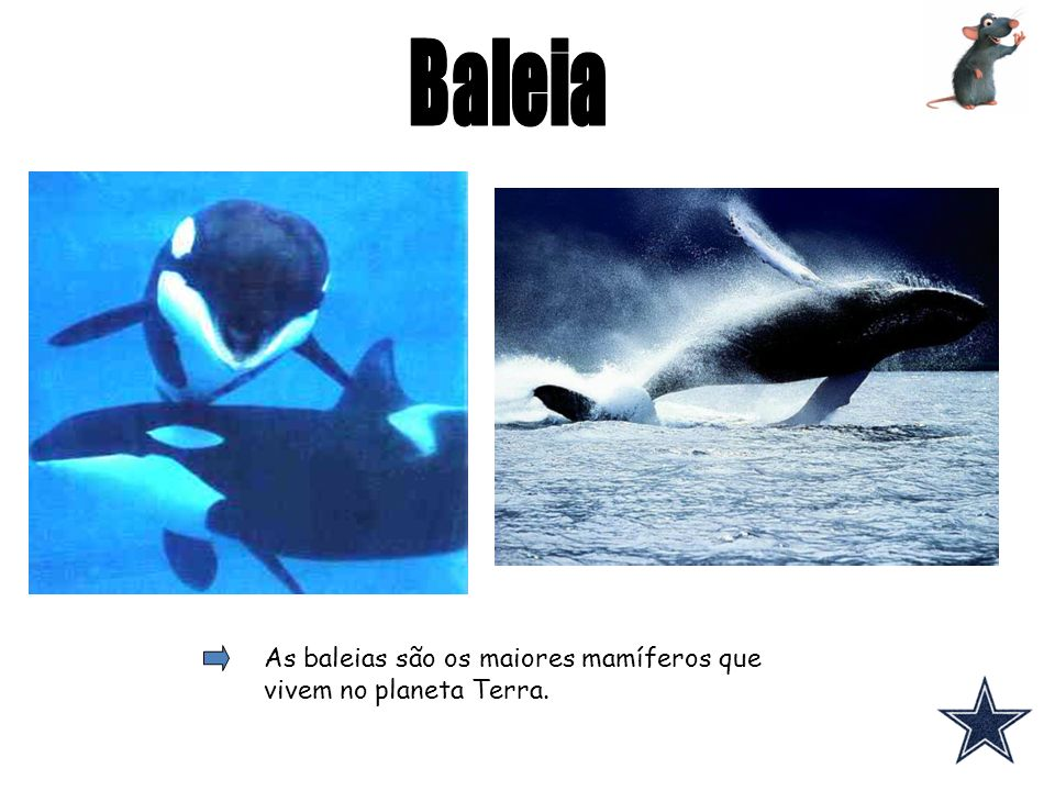 As baleias são os maiores mamíferos que vivem no planeta Terra.