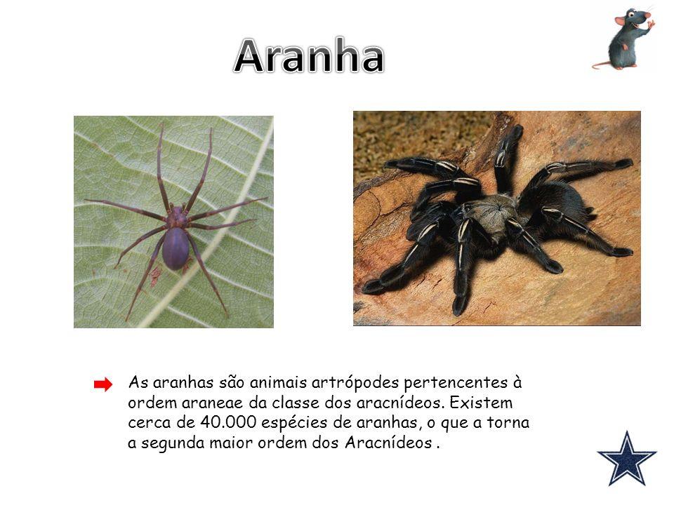 As aranhas são animais artrópodes pertencentes à ordem araneae da classe dos aracnídeos. Existem cerca de 40.000 espécies de aranhas, o que a torna a