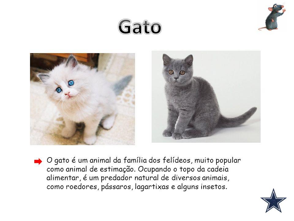 O gato é um animal da família dos felídeos, muito popular como animal de estimação. Ocupando o topo da cadeia alimentar, é um predador natural de dive
