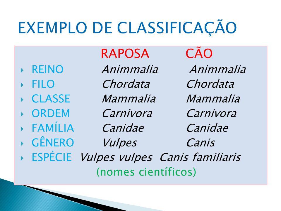 HOMEMCÃO REINOMetazoaMetazoa FILOChordataChordata CLASSE MammaliaMammalia ORDEM PrimatasCarnivora FAMÍLIAHominidaeCanidae GÊNEROHomoCanis ESPÉCIE Homo