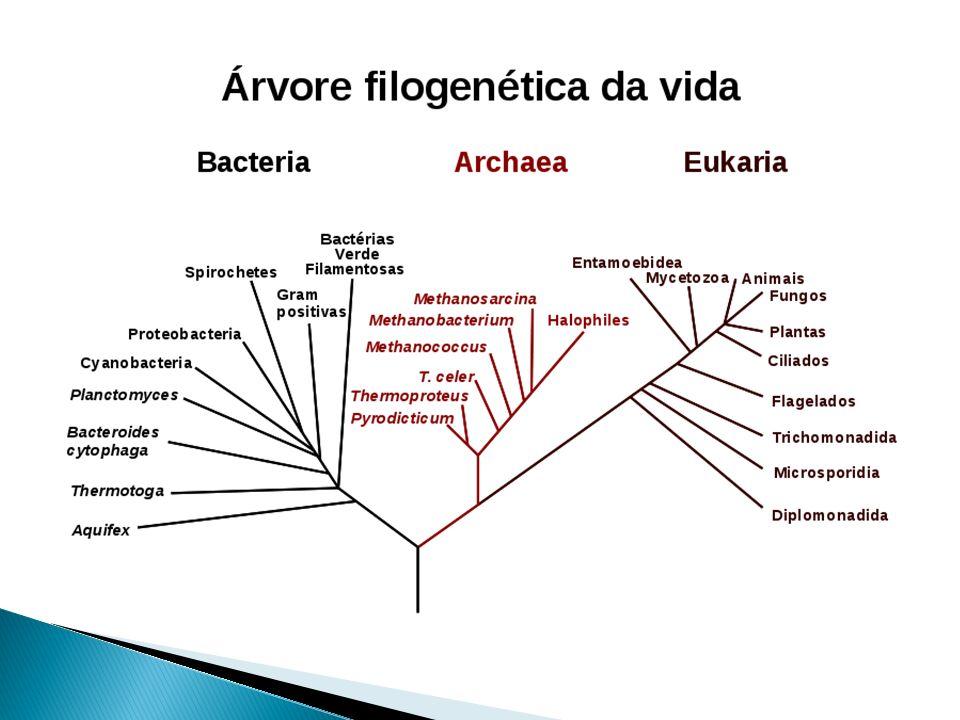 Árvore Filogenética: