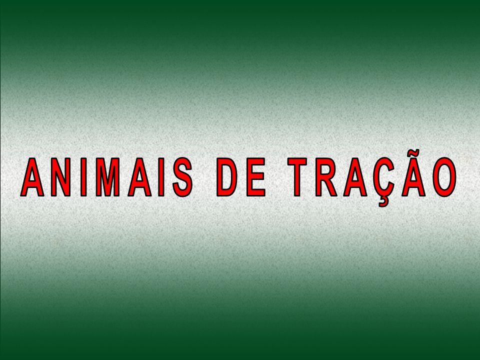 CASO 2: ÉGUA ABORTA POTRINHO EM VIA PÚBLICA: Em 18/10/2001, uma égua esquelética puxava uma carroça repleta de ferros em Rocha Miranda.