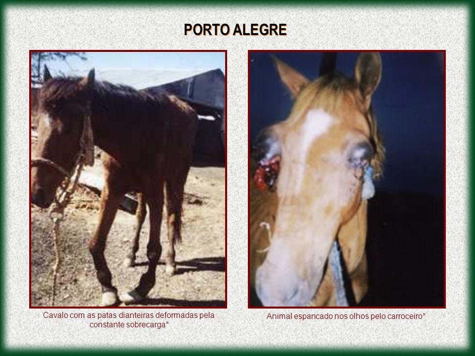 Carroceiro Infringindo a Lei nº 7.976/97, a qual Regulamenta a Circulação de Veículos de Tração Animal nas vias do Município de Porto Alegre. Visão La