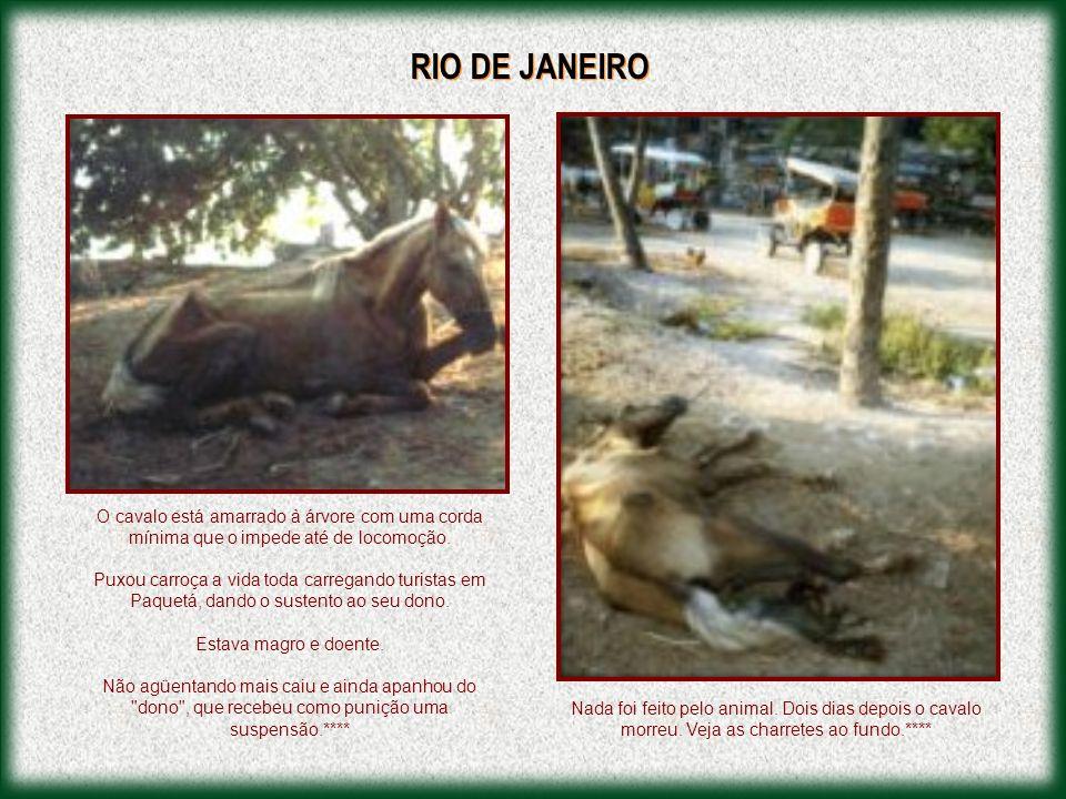 CARTAS PUBLICADAS NO JORNAL ZERO HORA: Andando pela Avenida Ipiranga, vi um cavalo extremamente magro, puxando uma carroça repleta de sacos de lixo.
