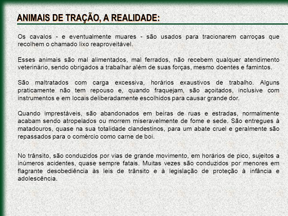O sacrifício de eqüinos, em alguns lugares do Brasil, é um processo cruel, anti- ético e ilegal.