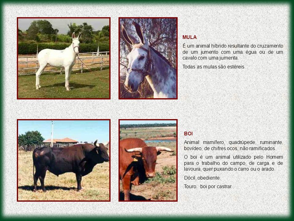 Equinos Brasil: br.geocities.com/equinosbrasil Apasfa: www.apasfa.org Eu Gosto de Bicho: www.eugostodebicho.com.br Gabea: www.gabea.com.br Sos Cavalos: www.ufrgs.br/dafv/sos_cavalos.htm Imepa: www.imepa.org.br FONTES DE PESQUISA PARA ESTA APRESENTAÇÃO MAUS TRATOS A ANIMAIS É CRIME EXIJA O CUMPRIMENTO DAS LEIS DENUNCIE PROTESTE RECLAME EXIJA RESPEITO PELOS ANIMAIS
