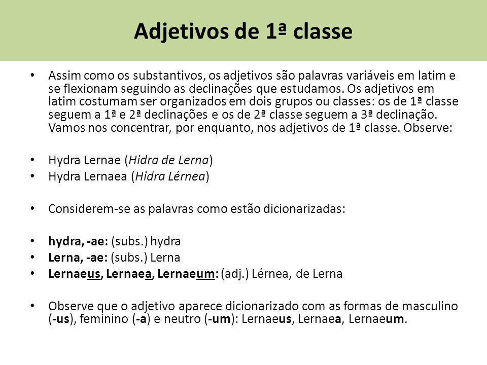 Adjetivos de 1ª classe Assim como os substantivos, os adjetivos são palavras variáveis em latim e se flexionam seguindo as declinações que estudamos.
