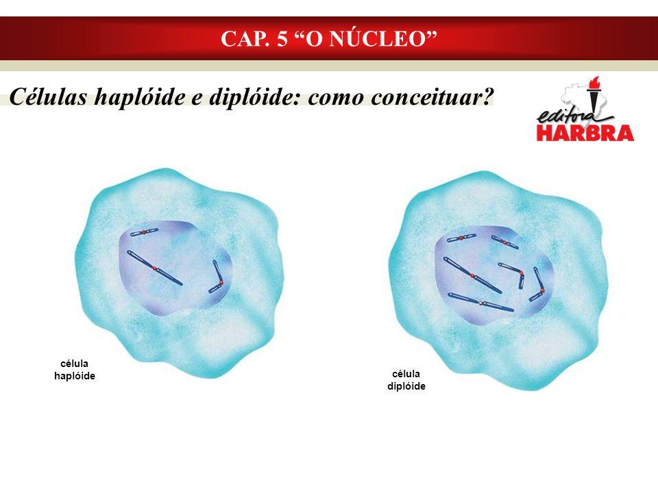 Células haplóide e diplóide: como conceituar? CAP. 5 O NÚCLEO célula haplóide célula diplóide