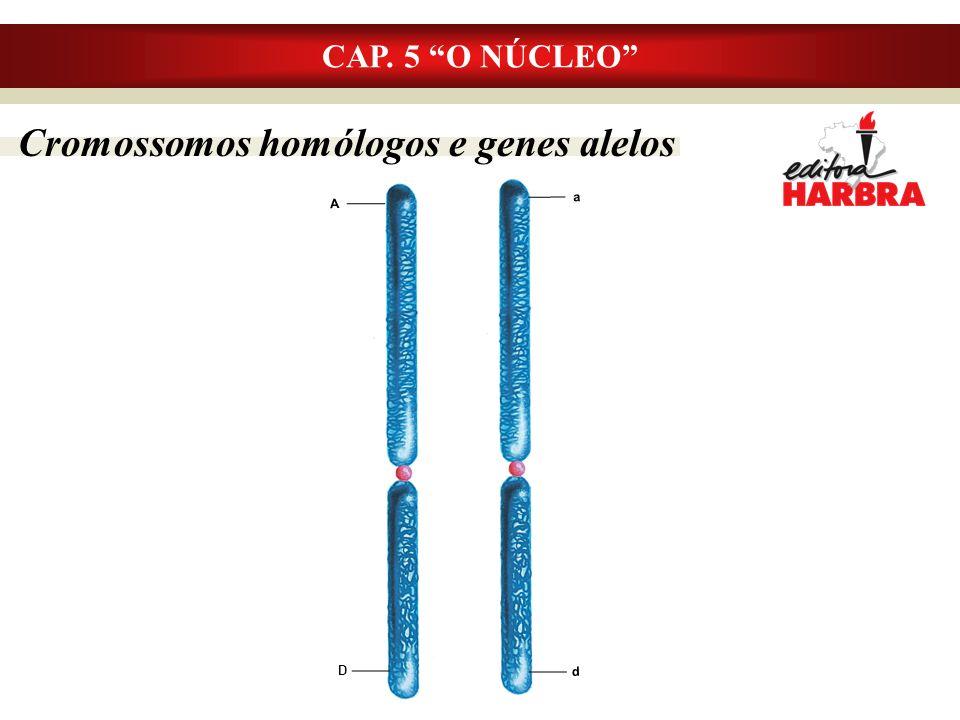 Cromossomos homólogos e genes alelos CAP. 5 O NÚCLEO a A d D