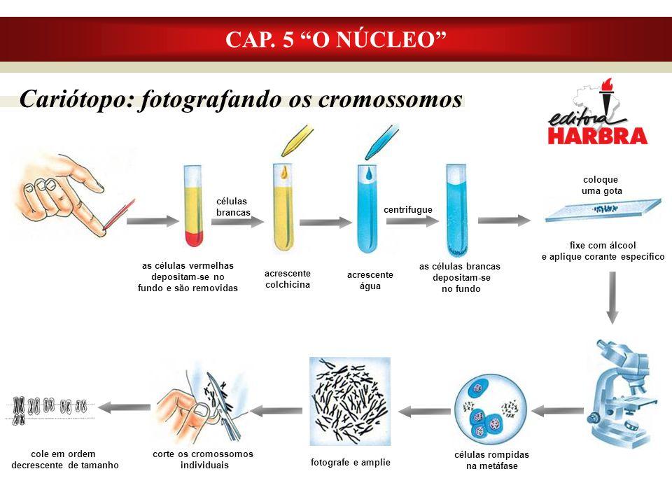 Cariótopo: fotografando os cromossomos CAP.