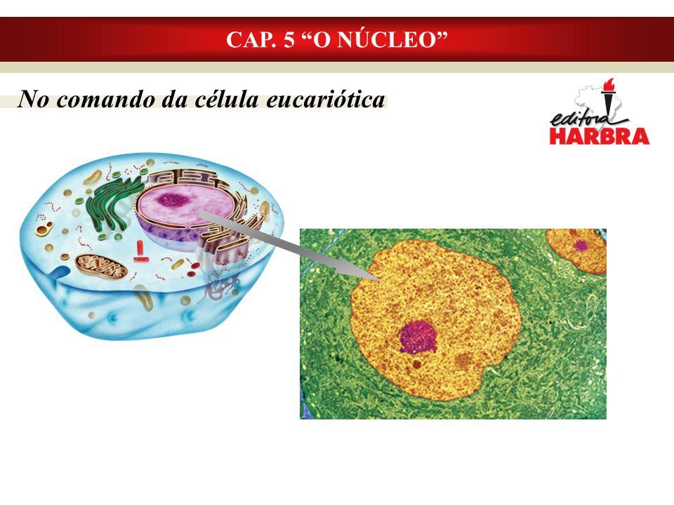 CAP. 5 O NÚCLEO No comando da célula eucariótica