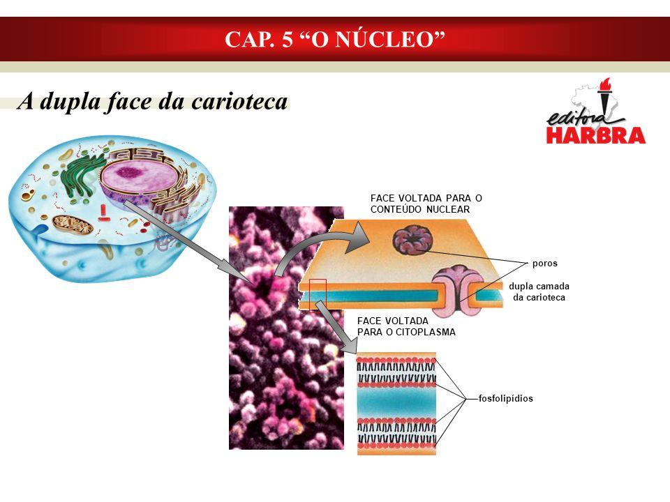 fosfolipídios CAP.