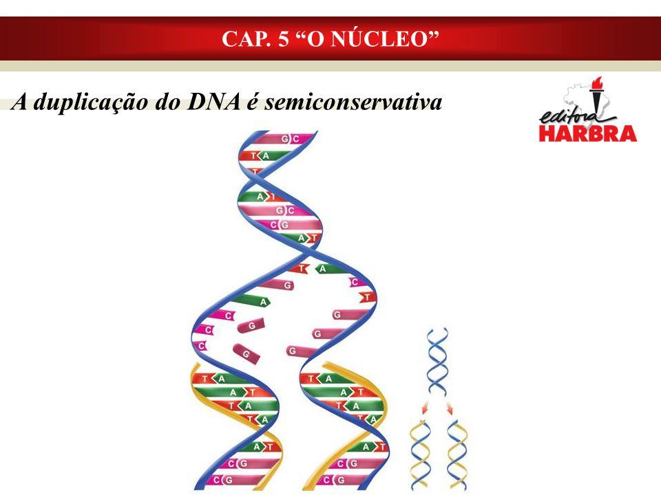 A duplicação do DNA é semiconservativa CAP. 5 O NÚCLEO