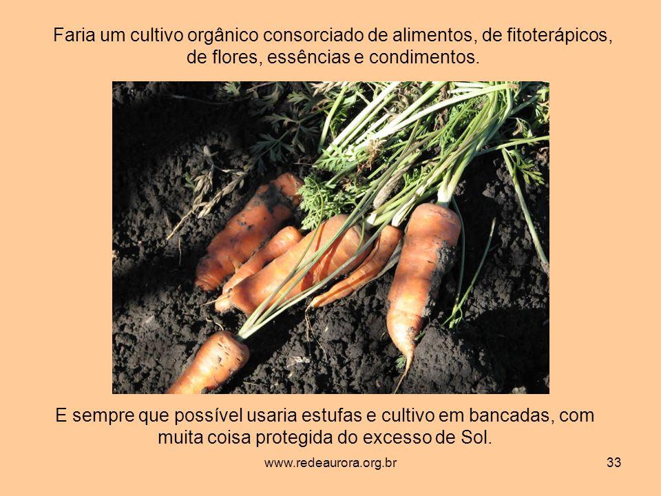 www.redeaurora.org.br33 Faria um cultivo orgânico consorciado de alimentos, de fitoterápicos, de flores, essências e condimentos.
