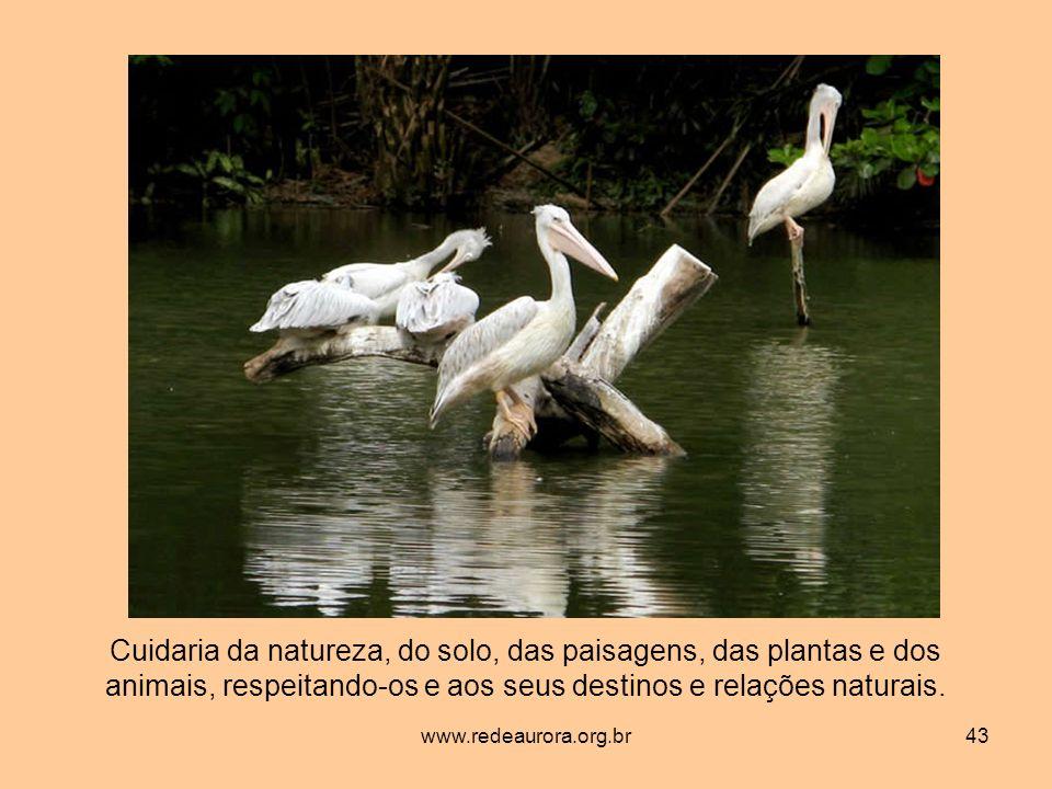 www.redeaurora.org.br43 Cuidaria da natureza, do solo, das paisagens, das plantas e dos animais, respeitando-os e aos seus destinos e relações naturais.