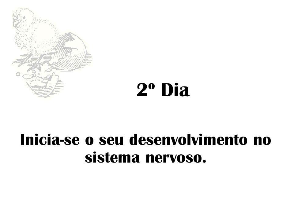 2º Dia Inicia-se o seu desenvolvimento no sistema nervoso.