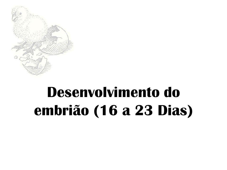 Desenvolvimento do embrião (16 a 23 Dias)