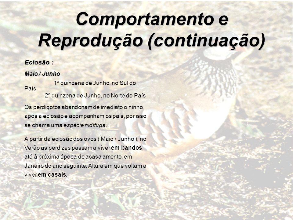 Comportamento e Reprodução (continuação) Eclosão : Maio / Junho 1ª quinzena de Junho, no Sul do País 2º quinzena de Junho, no Norte do País Os perdigo