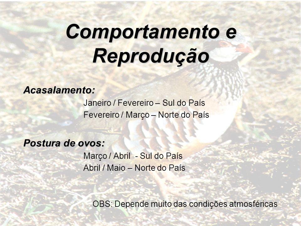 Comportamento e Reprodução Acasalamento: Janeiro / Fevereiro – Sul do País Fevereiro / Março – Norte do País Postura de ovos: Março / Abril - Sul do P
