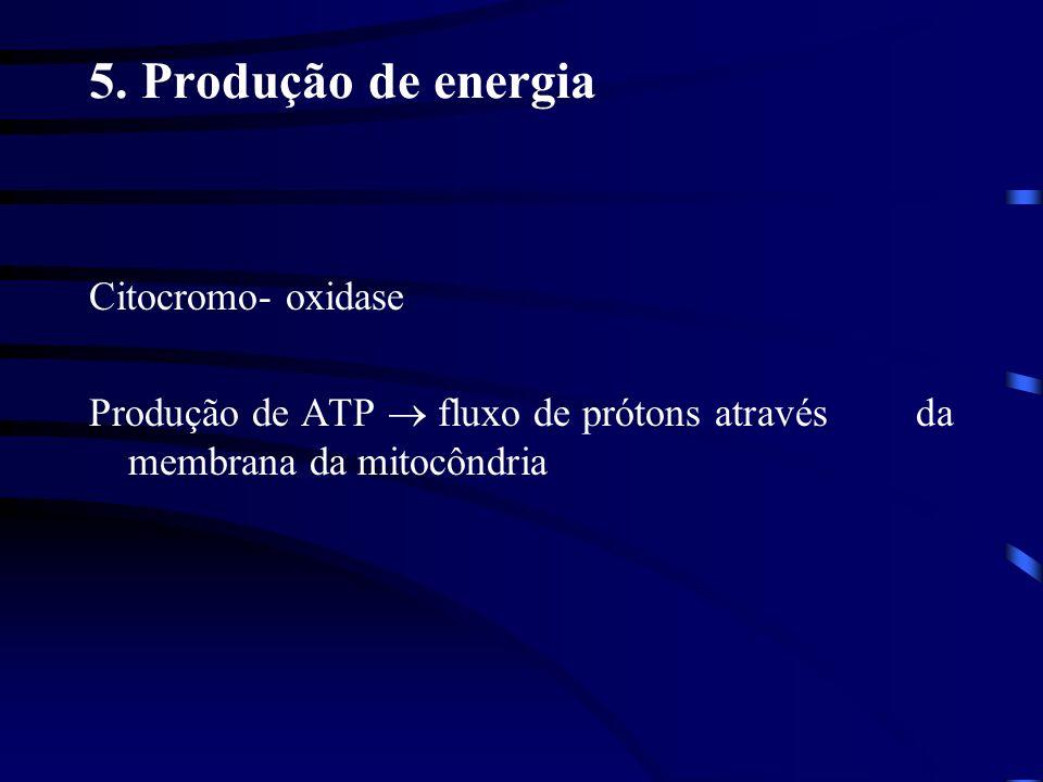 5. Produção de energia Citocromo- oxidase Produção de ATP fluxo de prótons através da membrana da mitocôndria