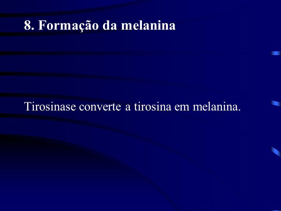 8. Formação da melanina Tirosinase converte a tirosina em melanina.