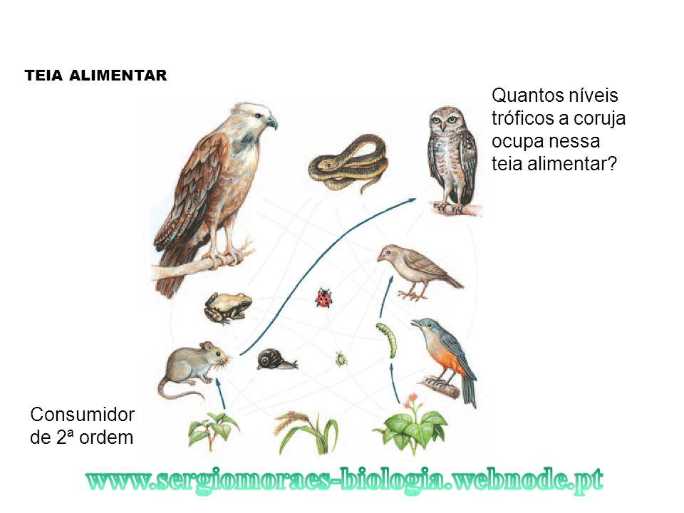 TEIA ALIMENTAR Quantos níveis tróficos a coruja ocupa nessa teia alimentar? Consumidor de 2ª ordem