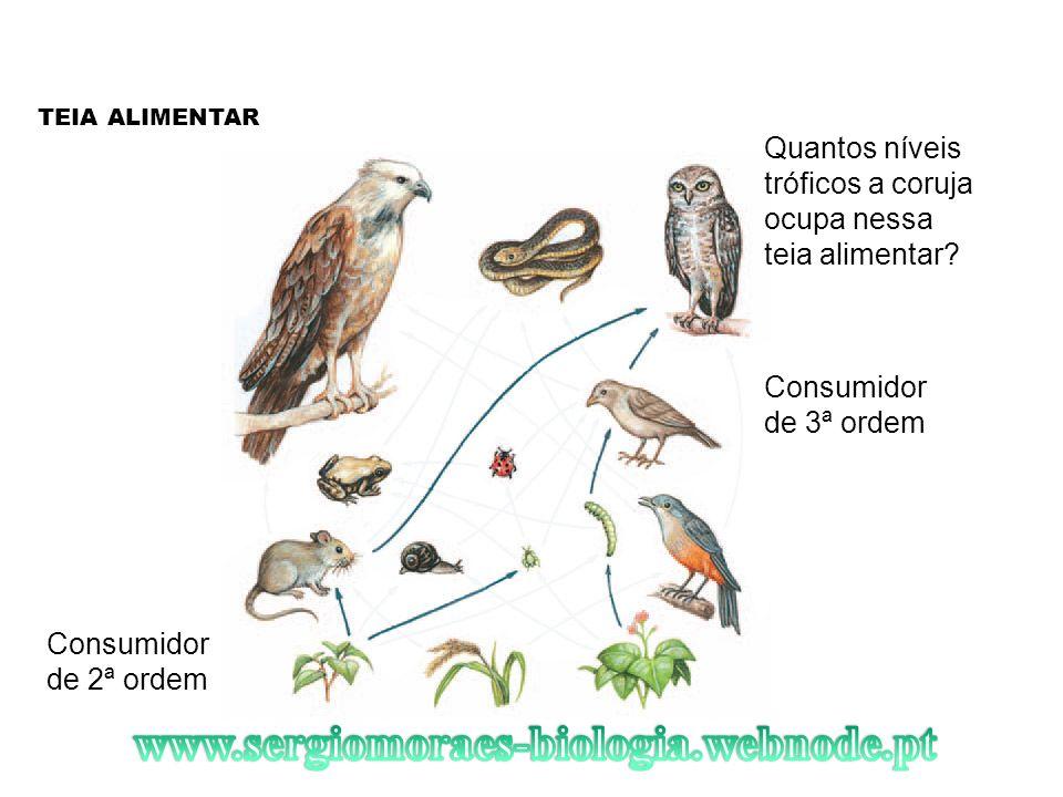 TEIA ALIMENTAR Quantos níveis tróficos a coruja ocupa nessa teia alimentar? Consumidor de 3ª ordem Consumidor de 2ª ordem